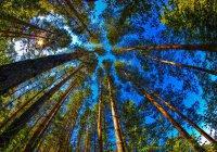 Казанцы впервые проведут на озере Лесное экологическую акцию