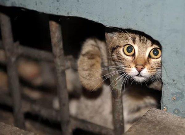 В данный момент волонтеры объявили сбор для покупки авиабилетов кошкам