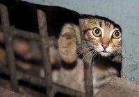 Бездомные кошки из Челнов едут в Германию