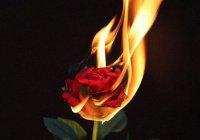 Когда Ибрагим был брошен в огонь, то в центре пламени стали расти розы...