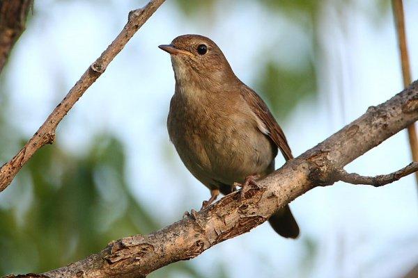 """""""..птица узнала все имена Аллаха Всевышнего. Этой птицей был соловей"""""""