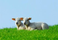 Животных с такими недостатками приносить в жертву нельзя!