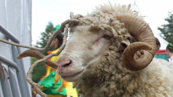 Если мусульманин при забое животного забудет произнести слова «Бисмиллях», то мясо этого животного можно будет употреблять в пищу