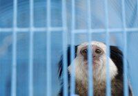 В Дубае появится передвижной приют для животных