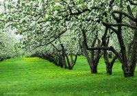 В Татарстане посадят яблоневые сады
