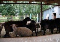 ДУМ РТ: в районах Татарстана к Курбан-байраму готовы