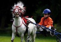 В Казани пройдет Кубок по конному спорту