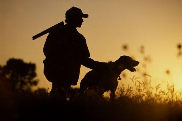 В Коране говорится о том, что мясо животных, которые были пойманы охотничьими собаками или птицами, является дозволенным
