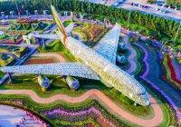 Как в Дубае при помощи 500 тысяч цветов побили мировой рекорд!