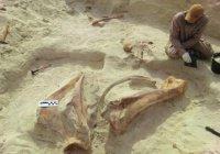 Ученые: в Аравийской пустыне обитали животные-гиганты