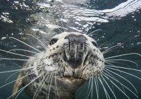 В США тюлененок сделал селфи с дайвером (ФОТО)