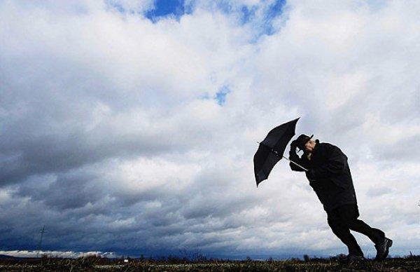 Организаторы надеются, что ветер скоро стихнет и можно будет продолжить выставку