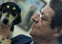 Президент Кипра приютил бездомного щенка