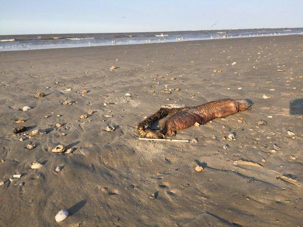 Ураган выбросил на пляж Техаса загадочного монстра (ФОТО)