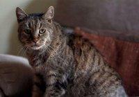 Самый старый в мире кот умер в Англии