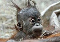 Детсад для обезьян открылся в Екатеринбурге