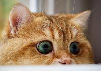 Самого ласкового кота в мире усыновили в США (ФОТО)