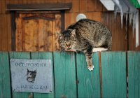 Финские ученые раскрыли тайну плохого характера у кошек