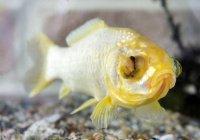 Исследование: В океанах почти не осталось старых рыб