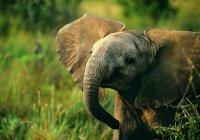 Туристы спасли слоненка в Кении (ФОТО)