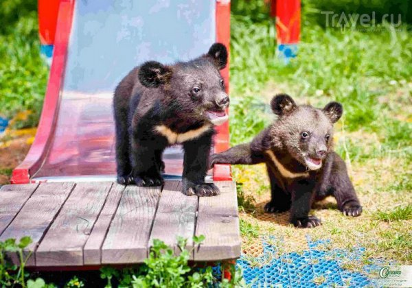 Животных поселили на территории приморского Центра реабилитации и реинтродукции