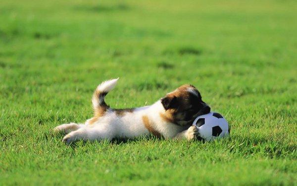 Собачка чуть несорвала футбольный матч вАргентине