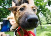 Выставка беспородных собак состоится в Казани