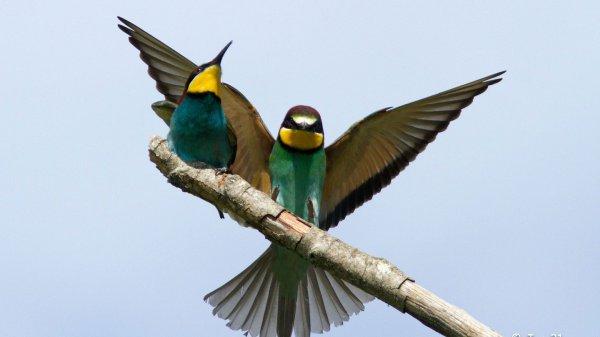 В соответствии с данными, обилие мелких наземных видов, таких, как жуки и птицы, возрастет