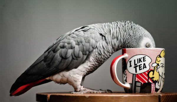 Попугай случайно заказал в электронном магазине подарочные коробки