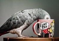 В Великобритании попугай сделал покупку в интернет-магазине