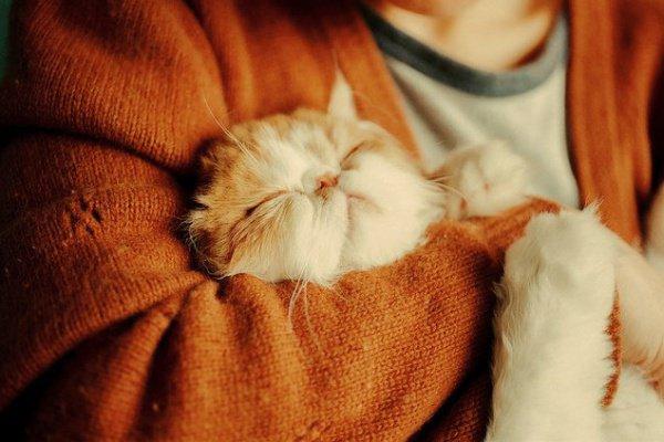 Кошачье урчание нормализует сердечный ритм