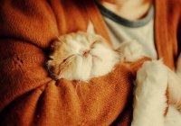 Ученые: Кошка продлевает человеку жизнь