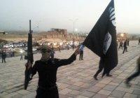 Стало известно, сколько чеченцев воюет в Сирии за ИГИЛ