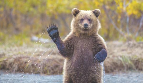 Лай собаки напугал медведя, и дикий зверь скрылся в чаще