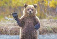 Красноярец вышел на пробежку с медведем (ВИДЕО)