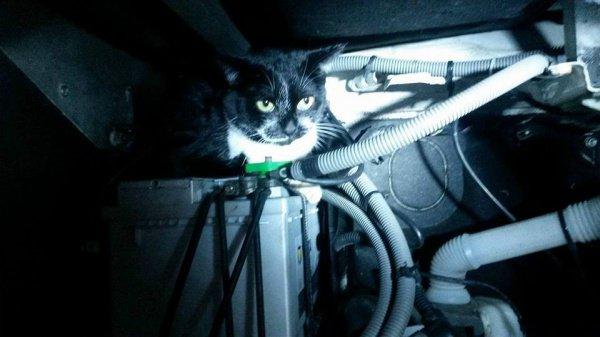 Кот-нелегал изФранции уехал вБельгию под крышкой капота автомобиля