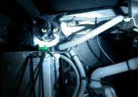 Французский кот случайно уехал в Бельгию