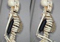 Искусственные мышцы сделают человека в 3 раза сильнее