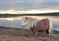 Пони заменил собаку семье из Шотландии (ВИДЕО)