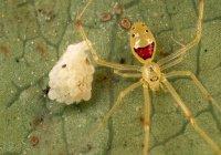 Новые виды пауков назвали в честь Ди Каприо и Обамы