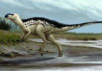 Кость неизвестного науке динозавра найдена в Чехии