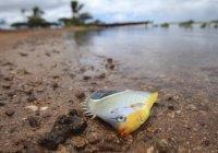В Мексике прошел дождь из рыб (ВИДЕО)