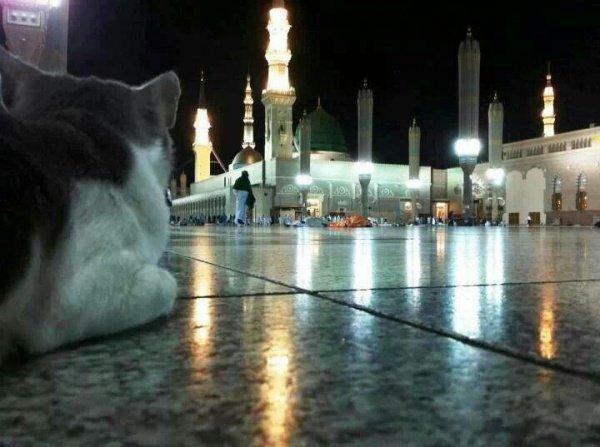 Каково быть котом в Мекке?
