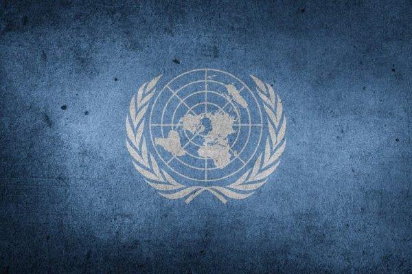 Учебники ООН вызвали недоумение экспертов.