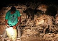 Почему в Эфиопии в День Ашура принято кормить гиен?