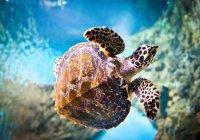 Черепаха развеяла прах океанографа в море