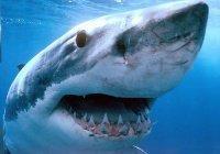 В Австралии женщина голыми руками поймала акулу