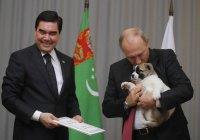 Президент Туркмении подарил Путину щенка алабая (ВИДЕО)