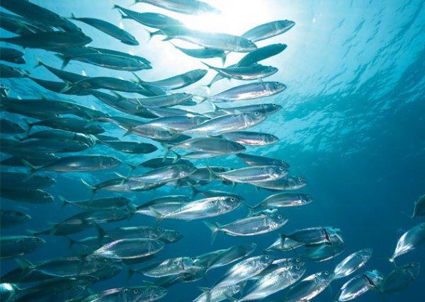 В море за горой Каф живут рыбы, которым поручено возносить салаваты...