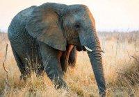 Дикий слон напал на мусульман в Бангладеш
